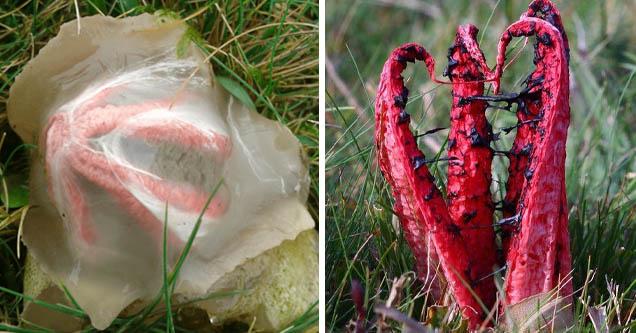Это не отродье демона, это гриб