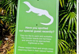 weird hotel | monitor lizard hotel - Have you spotted our special guest recently? They too liko to swim and sunbathe. The monitor lizards are harmless and should not be approached. Frightened or fed Please respect them and simply enjoy observing them in t