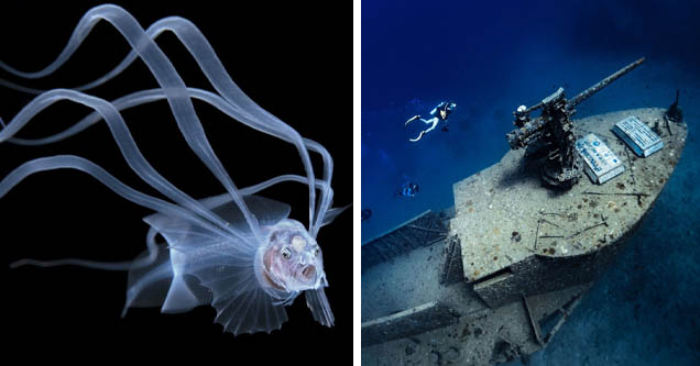 underwater photography | bony eared assfish | shipwreck