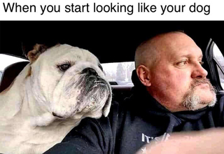 when you start looking like your dog meme