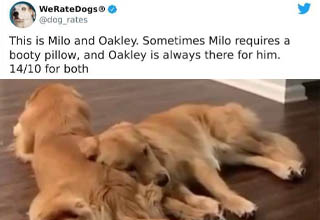 """They all look like winners to me! <br></br>There's a lot of really weird s**t on Twitter, but there are also some pretty great accounts like <strong><a href=""""https://twitter.com/dog_rates"""" target=""""_blank"""">WeRateDogs</a></strong> that provide a moment of levity from the usual <strong><a href=""""https://www.ebaumsworld.com/pictures/30-trashy-people-who-are-walking-dumpster-fires/86048514/"""" target=""""_blank"""">dumpster fire</a></strong> of a world we live in."""