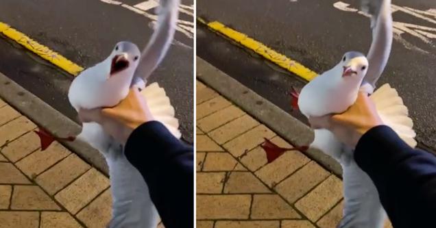 tiktok video guy grabbing a seagull in new zealand