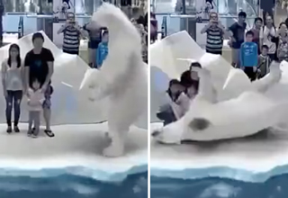 immersive animation whale and polar bear exhibit interacting with family