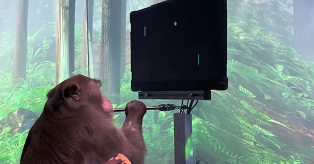 Monkey plays 'Pong' with just its mind using Neuralink chip