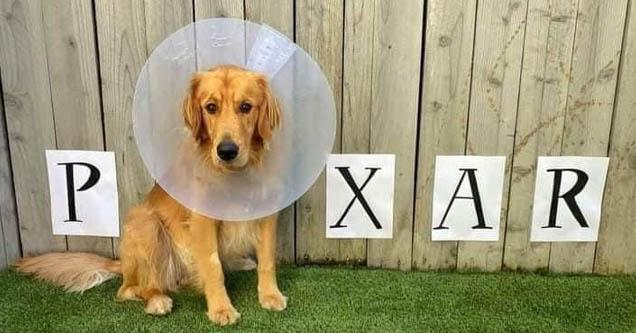Dog - P X A R