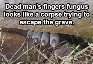 dead man's fingers fungus - Dead man's fingers fungus looks like a corpse trying to escape the grave
