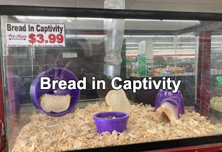 Meme - bread in captivity