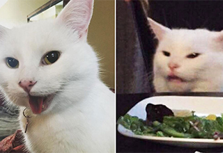 Smudge the cat from the popular Woman Yelling at a Cat memes