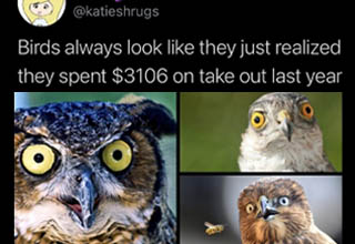 owl - katie Birds always look they just realized they spent $3106 on take out last year 6321 Twitter for iPhone
