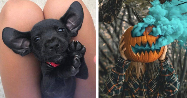 an adorable puppy and a pumpkin with blue smoke coming out of it