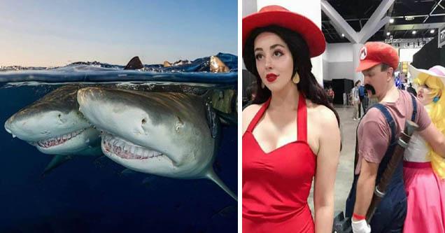 1 up girl | Sharks