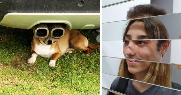 dog behind tailpipe, mirrored image