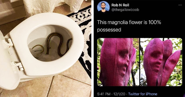 toilet with snake, weird flower