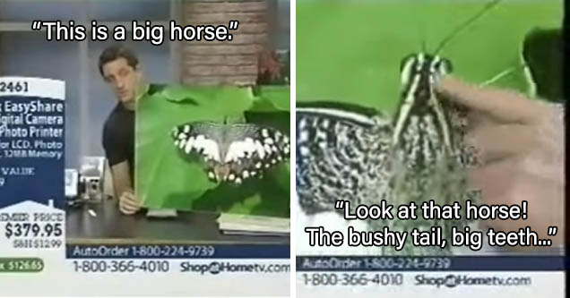 QVC host talks about photo of moth, but describes horse