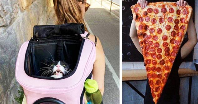 unhappy cat, giant slice of pizza