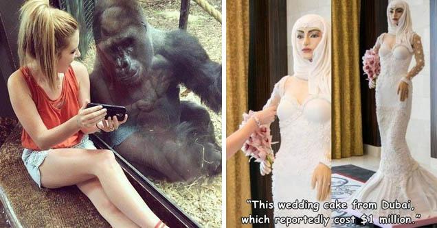 Girl shows phone to gorilla   dubai wedding cake