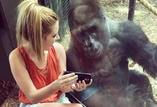Girl shows phone to gorilla