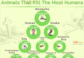 """There's a <strong><a href=""""https://www.ebaumsworld.com/pictures/20-infographs-to-make-you-think/86327975/"""" target=""""_blank"""">chart</a></strong> for everything. Wanna know how many people have been killed by mosquitos? We got you. Mythological creatures of the continental United States? We got you. How much to charge for an organ on the black market? We got you, and also are a little scared of you."""