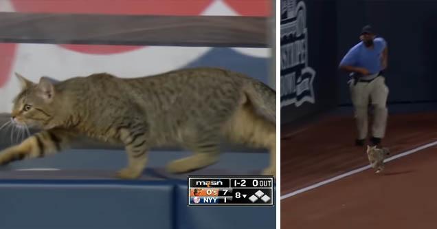 cat at yankees stadium