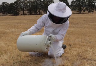 a man in a bee suit pouring liquid nitrogen into a yellow jacket nest