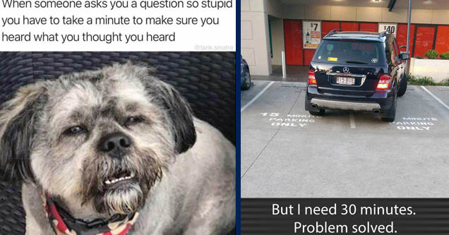 squinting dog meme - When someone asks you a question so stupid you have to take a minute to make sure you heard what you thought you heard sinatra | vehicle registration plate - $7 $40 w LoL 815 Rue 5 Minut Paking Ovel > Ware Acing But I need 30 minutes.