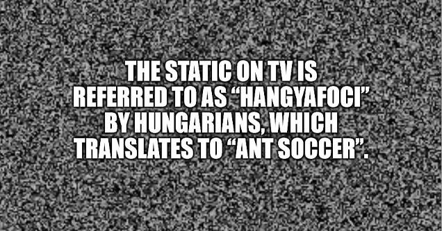 static fact