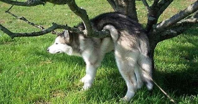 dog stuck in tree