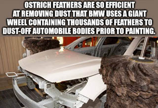 car - Ostrich Feathers Are So Efficient At Removing Dust That Bmw Uses A Giant Wheel Containing Thousands Of Feathers To DustOff Automobile Bodies Prior To Painting. imgflip.com
