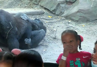 gorillas at the Bronx Zoo perform oral sex while parents and kids watch in horror