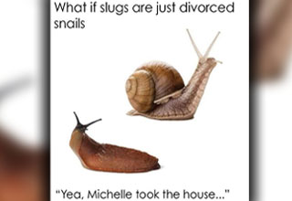 if slugs are just divorced snails - What if slugs are just divorced snails 1