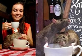 It's Live Rats, Rats, and more Rats at this wacky San Francisco restaurant.  In addition to all you can drink coffee, tea, and beverages, your 50 bucks will get you a serving of WTF, as rats have free reign of the place.