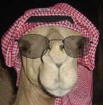 Ahab_Arab