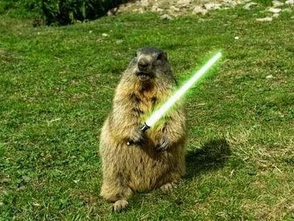 BeaverSaber