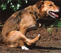 Dogfart