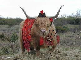 Scottish_Meat