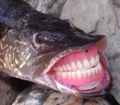 cbassthefish