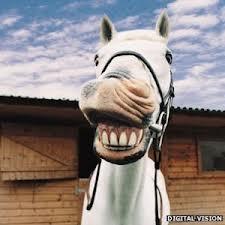 horsed1ck
