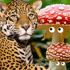 leopard_fungus