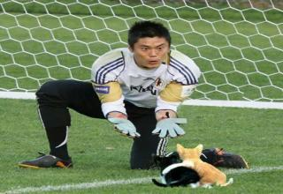 The internet is going nuts posting soccer cat photos