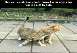 Heartbreaking pictures capture the moment a Husband cat stumbles in on his girl giving the goods to another Tom.