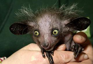 Whether they're shaved, have alopecia, or are just naturally hairless... Animals look weird without their fur.