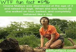 18 Fun Facts to Tickle Your Brain - Wow Gallery | eBaum's World