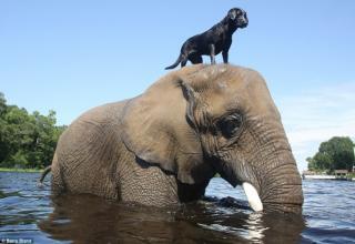 I love you Elephant. I love you too, Lab.