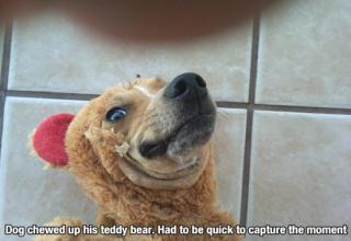 De-motivational Doggy Posters!!