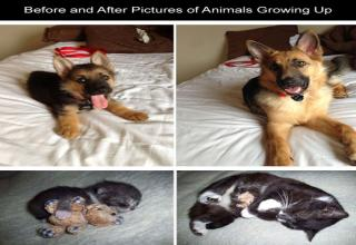 Before and After Pictures of Animals Growing Up with their owners.