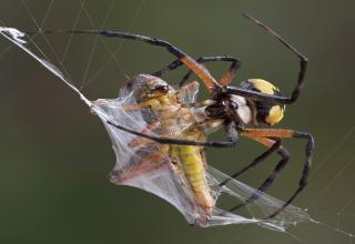 Webs of steel  !!!