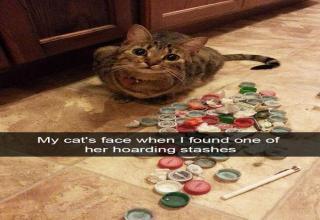 Snapcats?