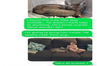 Husband gets tricked into thinking his wife has a coyote in the house.
