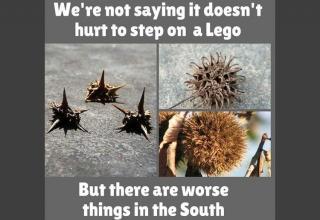 Cuz it's a southern thing, yall.