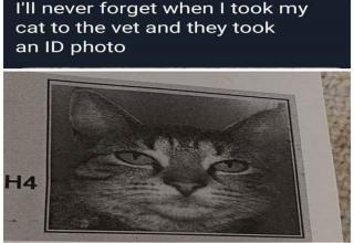 Dump of randoms with some cat memes sprinkled here and there. And here's a list of <a href=https://cheezburger.com/9947141/collection-of-fifty-five-memes-about-the-hardships-of-life>fifty-five memes</a> about everyday life you will probably find relatable.